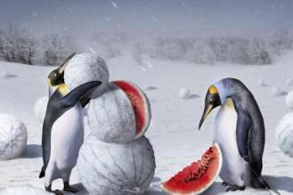 penguins-watermelons-winter-1740729-480x320